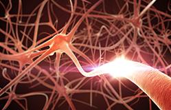 pravilno-funkcioniranje-i-zdravlje-nervnog-tkiva-i-mozdanih-celija