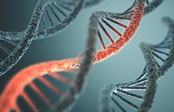 sintezu-DNK-i-RNK-(genetski-materijal-u-svakoj-celiji)